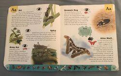 Bug Dictionary (1).jpeg