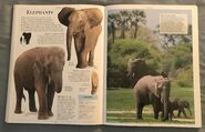 DK Encyclopedia Of Animals (75)