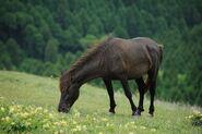 Horse, Misaki.jpg