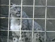 LPZ Snow Leopard