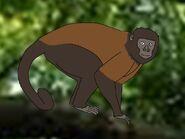 Rileys Adventures Black Capuchin