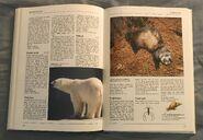 The Kingfisher Illustrated Encyclopedia of Animals (122)