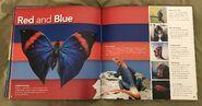 Animal Colors (Beth Fielding) (9)
