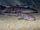 Broadfin Sawfin Catshark