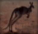 Kangaroo-disneythinkfast