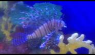 Niabi Zoo Lionfish