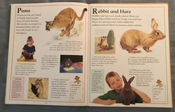 The Kingfisher First Animal Encyclopedia (55).jpeg