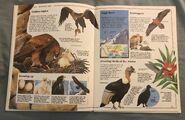 Usborne World Wildlife- Mountain Wildlife (11)