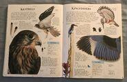 DK Encyclopedia Of Animals (102)