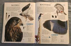 DK Encyclopedia Of Animals (102).jpeg