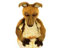 Kasey the Kangaroo.jpg