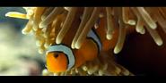Oceans 2010 Clownfish