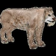 Smilodon gracilis