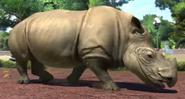 Sumatran-rhinoceros-zootycoon3