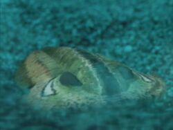 WWM1x1 Trilobite.jpg