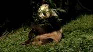 Animal Atlas Giant Panda