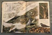 Birds (Eye Wonder) (8)