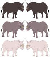 Black rhino subspecies