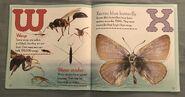 Bugs A-Z (12)