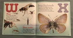 Bugs A-Z (12).jpeg