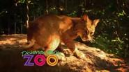 Dickerson Park Zoo Bobcat