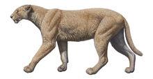 Machairodus-catocopis-baja.jpg