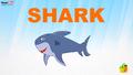 MagicBox Shark
