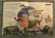 Mammals (Eye Wonder) (2)