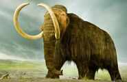 Woolly-mammoth-standing.ngsversion.1466628279948.adapt.1900.1