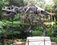 DAK Tyrannosaurus