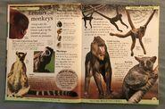 DK First Animal Encyclopedia (3)