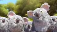 JungleBunch Koalas