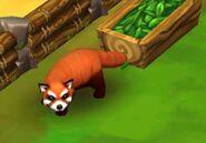 Red-panda-zoo-2-animal-park
