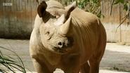 The Zoo Rhinoceros