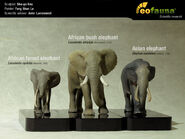 Three Species Of Elephants and Two Mammoths