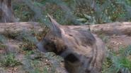 Utica Zoo Hyena