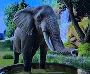 African Forest Elephant ZTX
