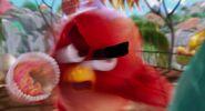 Angry-birds-disneyscreencaps.com-387