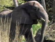DAKTFA Elephant