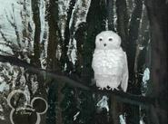 Little Einsteins Owl