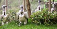 Memphis Zoo Vultures