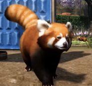 Planet Zoo Red Panda