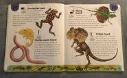 Reptiles and Amphibians Dictionary (9)