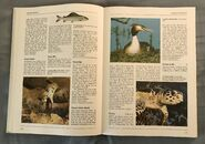 The Kingfisher Illustrated Encyclopedia of Animals (64)