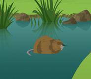 Wild Kratts Muskrat