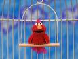 Elmopetbird