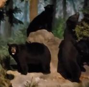 Rolling Hills Zoo Black Bears