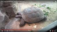 Saint Louis Zoo Giant Tortoise