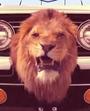 TTG Lion V2