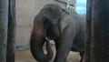 Tulsa Zoo Elephant